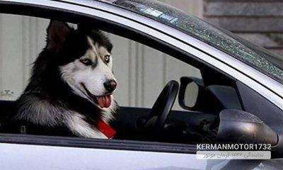 حمل سگ با خودرو غیر قانونی است